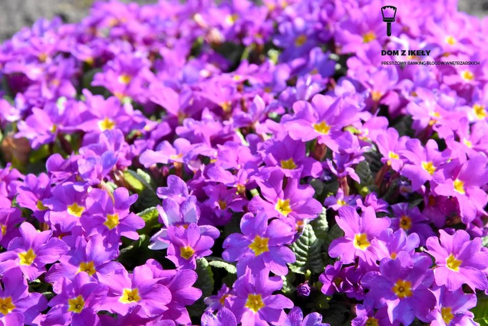 jakie kwiaty do ogrodu przed domem?