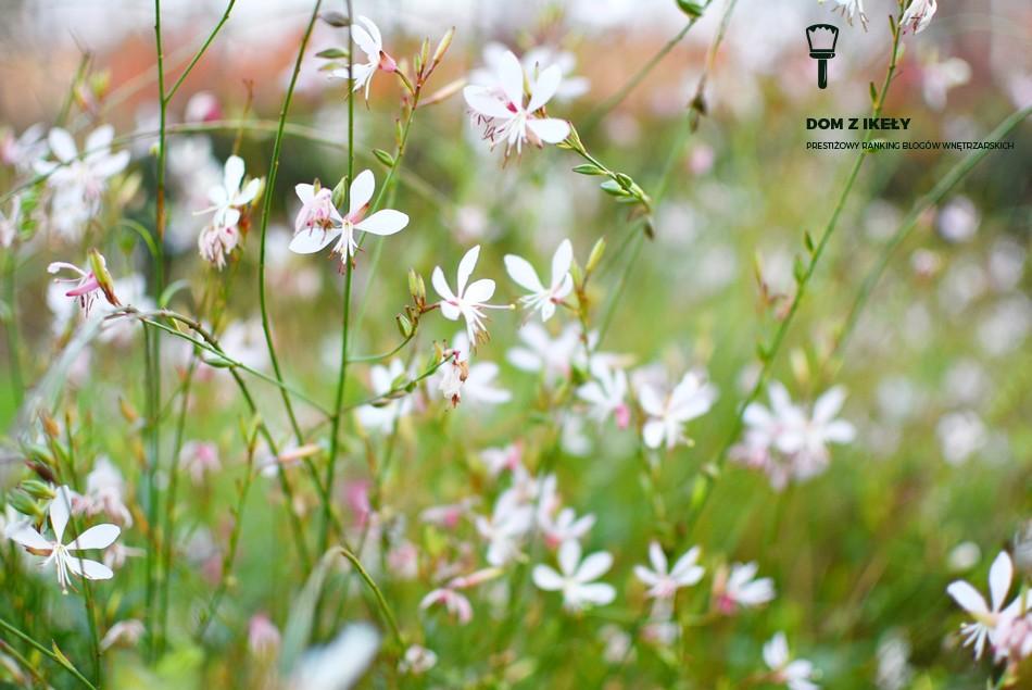 jakie kwiaty do twojego ogrodu?