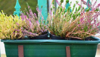 Jak powiesić kwiaty na balkonie