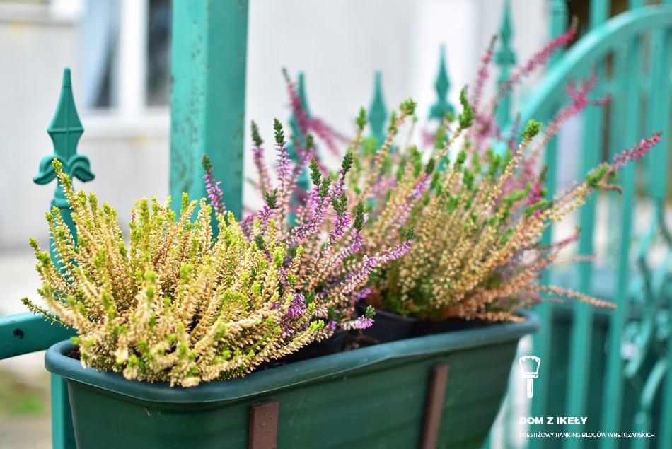 jakie kwiaty na balkon w kwietniu
