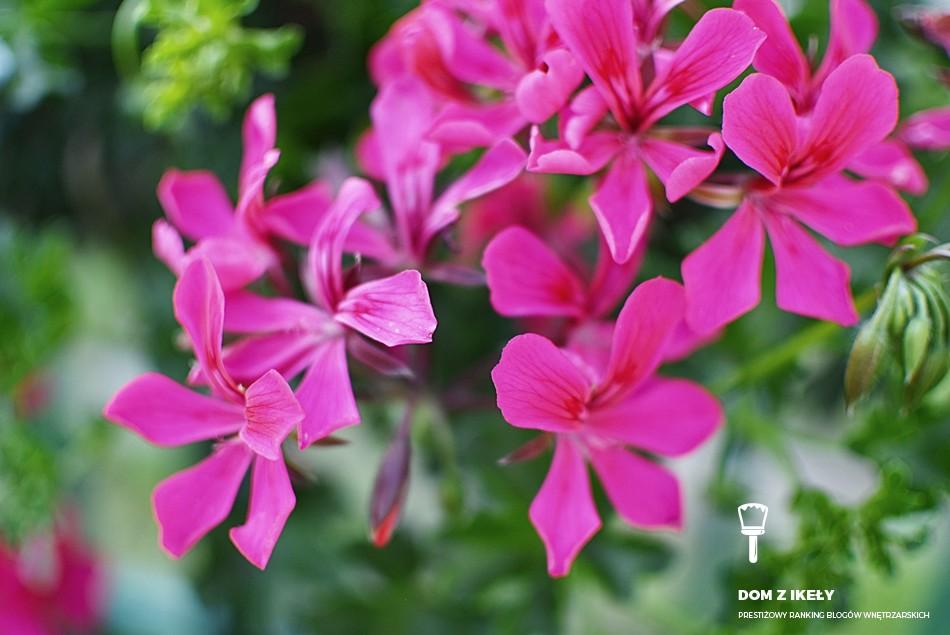 Jakie kwiaty na balkon
